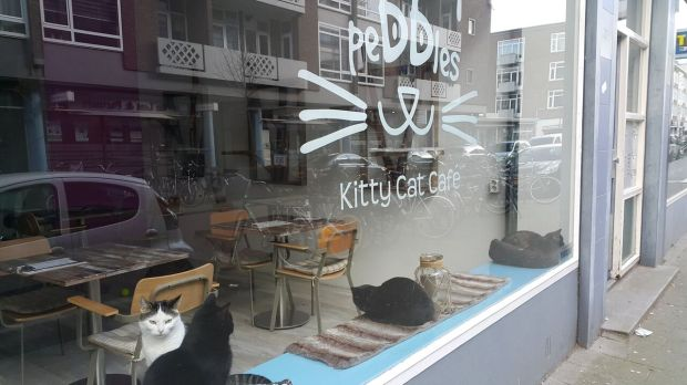 Cat Cafe_preview